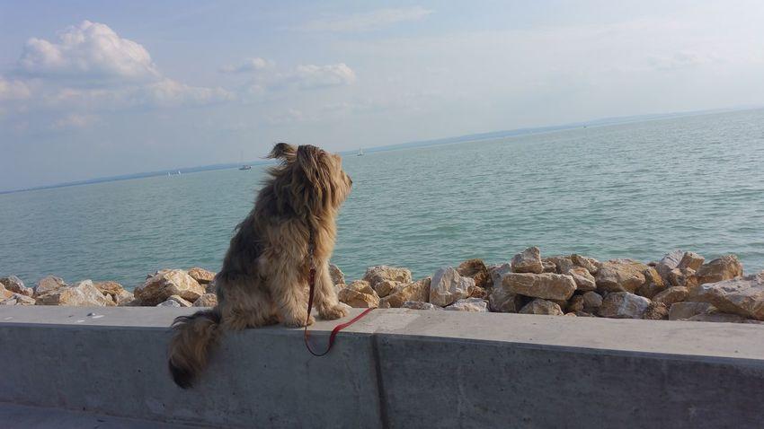 Animal Water No People Nature Beauty In Nature Sky Dog❤ Dog Life Nature Pets Lake Balaton Outdoors