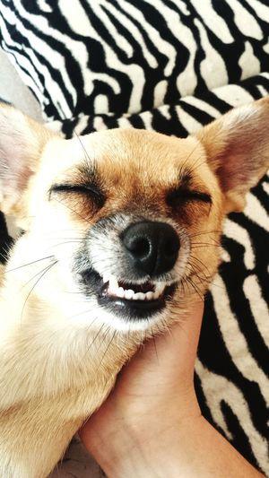 One Animal Dog Pets Animal Nose Focus On Foreground