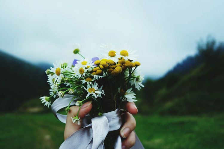 Cropped Image Of Hand Holding Daisy Flowers Bouquet