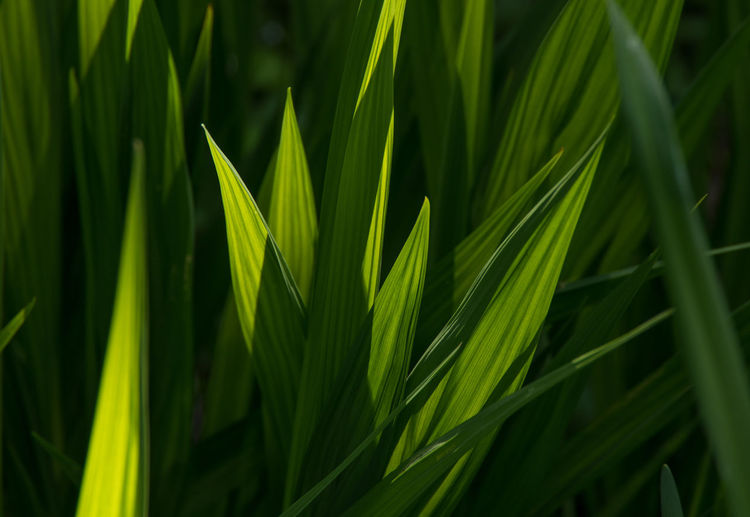 Full frame shot of grass blades