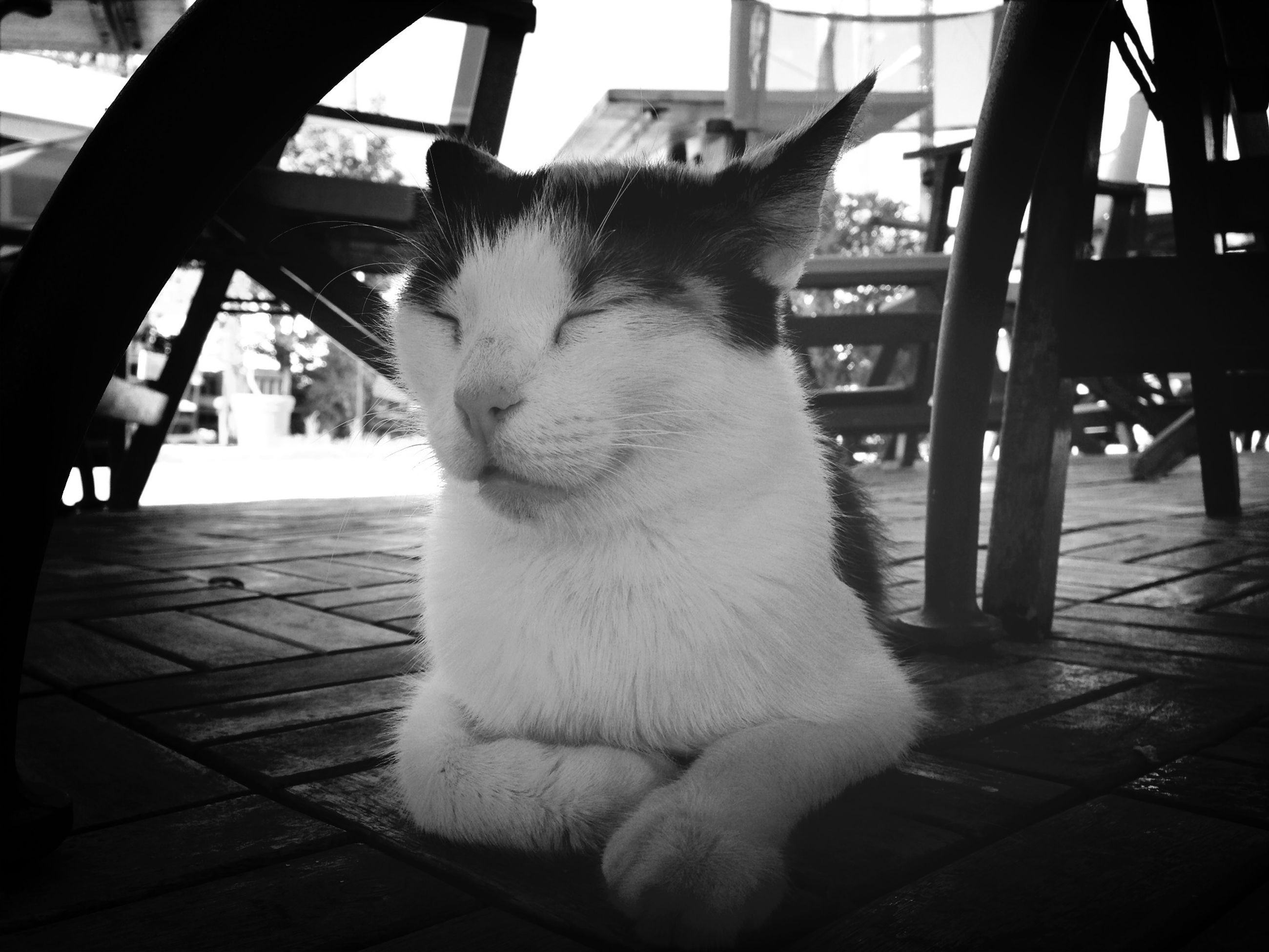 domestic animals, domestic cat, animal themes, one animal, pets, mammal, cat, feline, indoors, whisker, sitting, relaxation, wood - material, close-up, chair, table, sunlight, looking away, no people, home interior