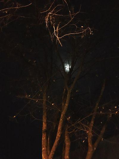 Tree Night View