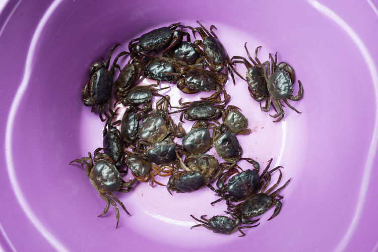 Close-Up Of Crabs In Purple Plate