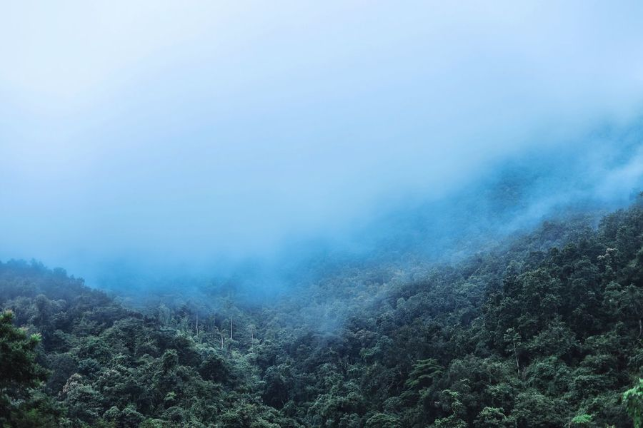 Forest And fog Beauty In Nature Plant Fog Tree Scenics - Nature Tranquility Tranquil Scene Environment