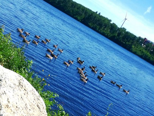 Large Group Of Animals High Angle View Day Animal Themes Animals In The Wild Outdoors Nature Bird Flock Of Birds No People Animal Wildlife Water Colony Sea Sky Beauty In Nature Wild Animal Photography Geese In Water Geese In Nature Geese Migration Geese Families Geese, Nature, Birds,