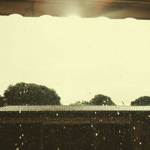 Chuva e sol , casamento da raposa. Chuva Rain Chuvaemgoiania