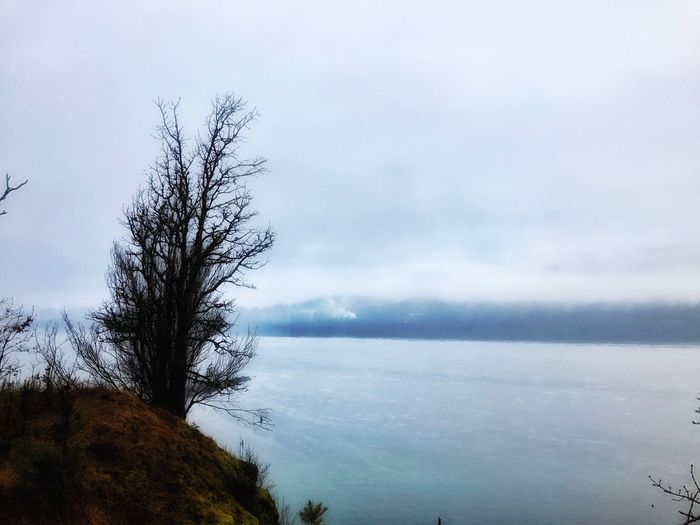 Sky Columbia River Gorge Beauty In Nature Scenics Tranquility Tree Cloud - Sky Tranquil Scene No People Outdoors Idyllic Bare Tree Water Oregonlife Enjoying Life My Point Of View Oregonexplored Oregon Day Landscape Horizon Over Water Lone