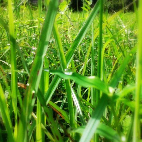 Nature Grass Green Water droplets latepost