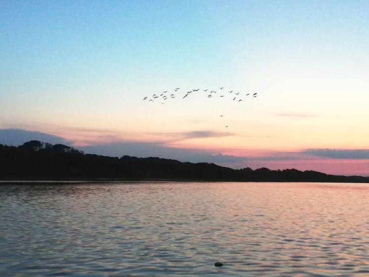 Cormorani in volo Flamingo Flock Of Birds Blue Silhouette Mid-air Horizon Over Water Wave Animal Migration Romantic Sky Calm