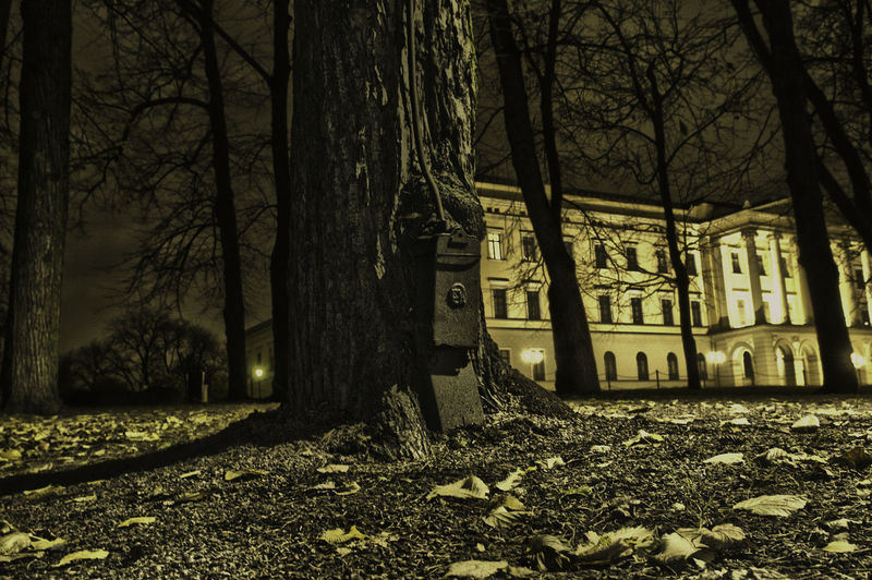 The castle of the norwegian king Architecture Autumn Branch Building Exterior Built Structure Forest Nature Night No People Norwegian Castle Outdoors Tree Tree Trunk Black And White Friday The Great Outdoors - 2018 EyeEm Awards