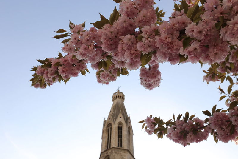 Architecture Beauty In Nature Church Church Architecture Church Tower Day Flower Freshness Growth Japanese Cherry Blossoms Nature No People Outdoors Sakura