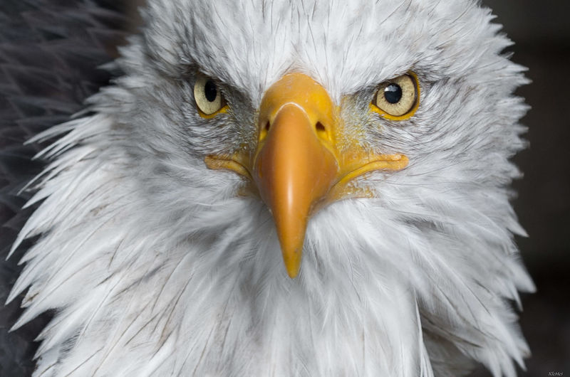 Animal Bird Of