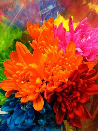 Beautiful Flowers Blue Flower Bouquet Bright Colors Dozen Roses Flower Photography Flowers Flowers For Her Macro Photography Multi Color Flowers Multicolors  Orange Flower Photography Plants Pretty Flowers Roses Are Red Roses Flowers