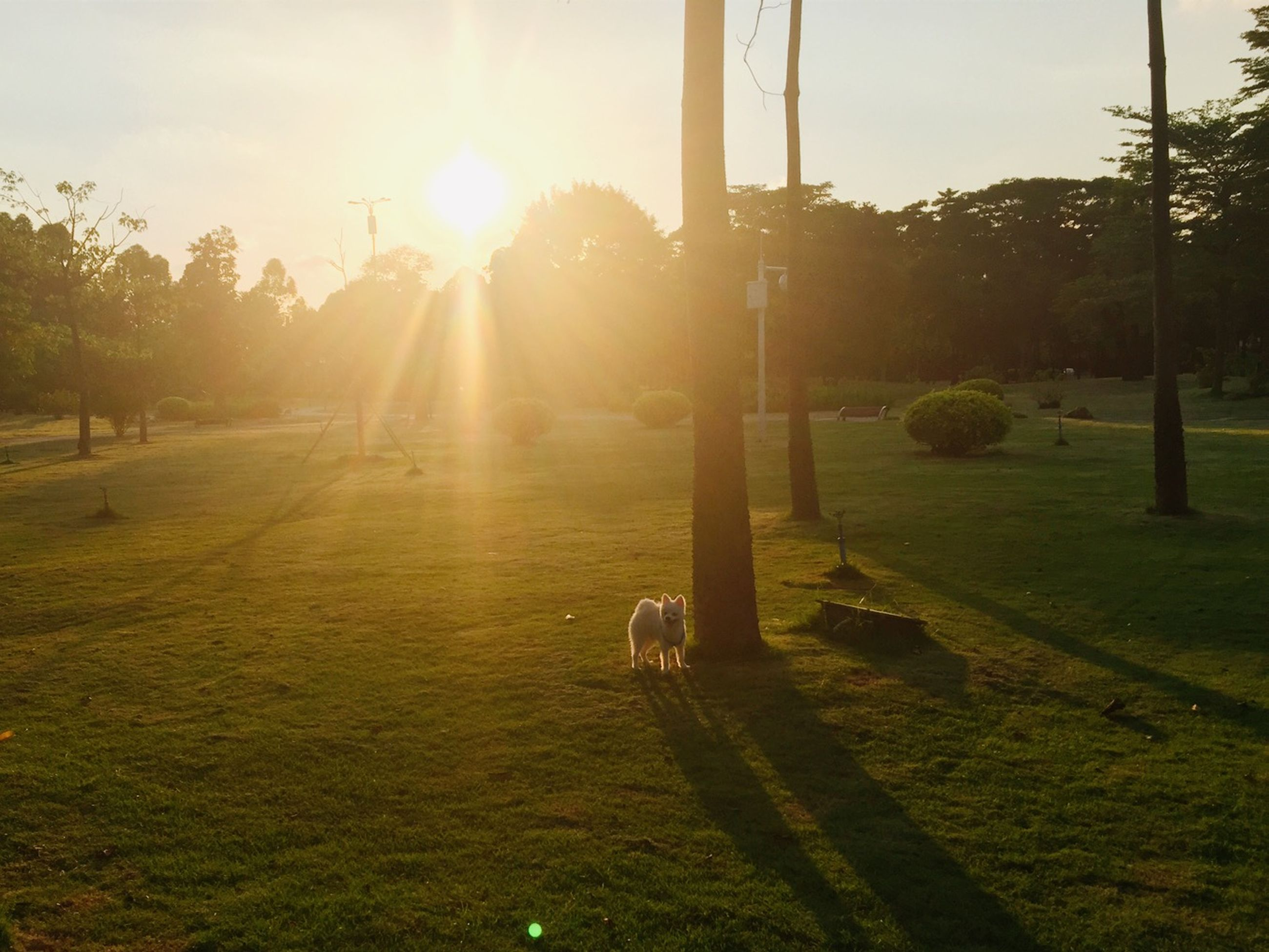 sun, grass, sunlight, tree, sunbeam, lens flare, field, grassy, park - man made space, tranquility, sunset, landscape, nature, tranquil scene, sunny, growth, shadow, sky, lawn, outdoors
