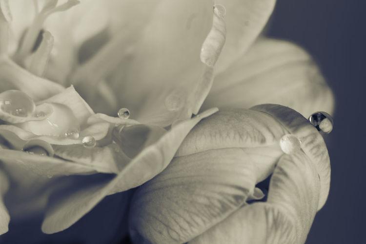 Close-up Eye4photography  Fragility Flower Head Jacqueline Schreiber Canon EOS 600D DSLR Vintage Lens KenkoExtensionTubes Pentax-M 135mm Enjoying Life Eye4photography  Indoor Photography Eye4photography  Focus On Foreground Fresie
