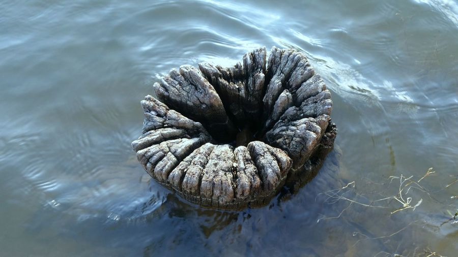 High angle view of tree stump in lake