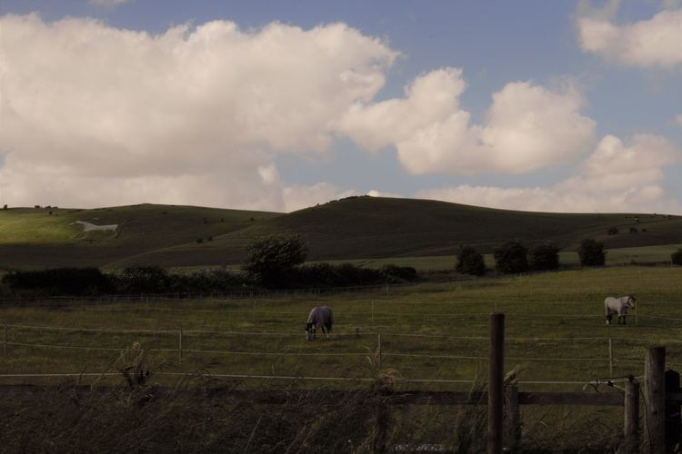 White Horse Pewsey White Horse Portrait Animal Animal Themes Barrier Cloud - Sky Domestic Environment Fence Group Of Animals Land Landscape Livestock Mammal No People Outdoors Sky