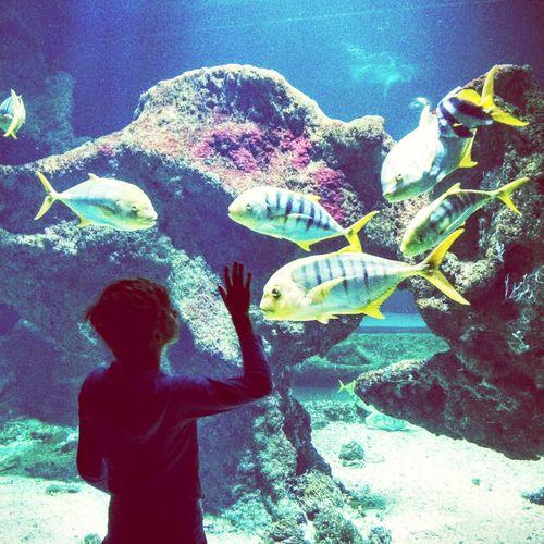 Aquarium La Rochelle Fishes Colors