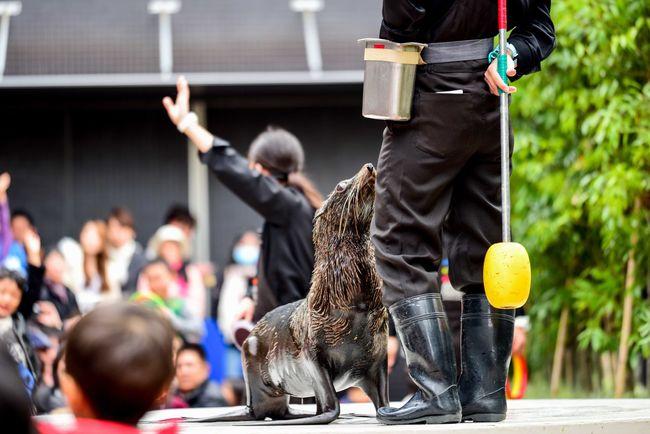 Acquatorium Animal Aquarium Aquarium Life EyeEm EyeEm Best Shots EyeEm Gallery EyeEm Nature Lover EyeEmBestPics Eyeemphotography Fish Leisure Activity Sealife Sealifeaquarium Tokyo Tokyo,Japan