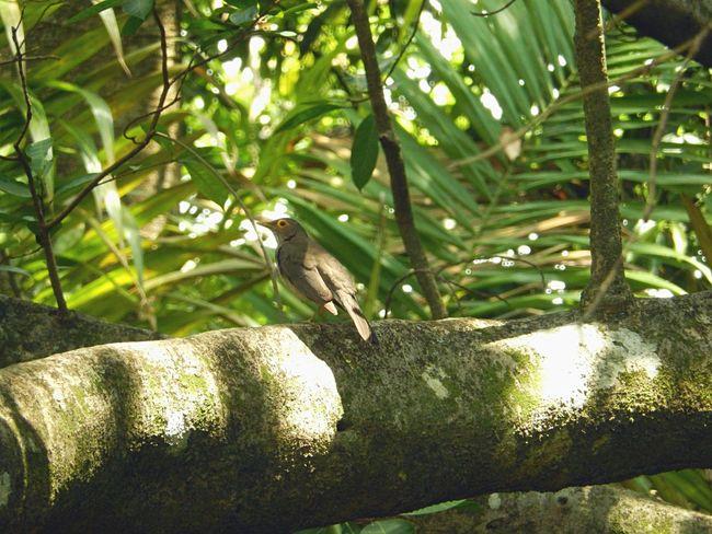 Amazon Parrot Amazon River Amazona Amazonas Animals In The Wild Bird Photography Blue Bird Colors Nature Amazon Amazon Rainforest Amazonia Animal Animal Wildlife Animlas Beauty In Nature Bird Birdhouse Birds Camouflage Flying Multicolors  Nest Parrot Parrots