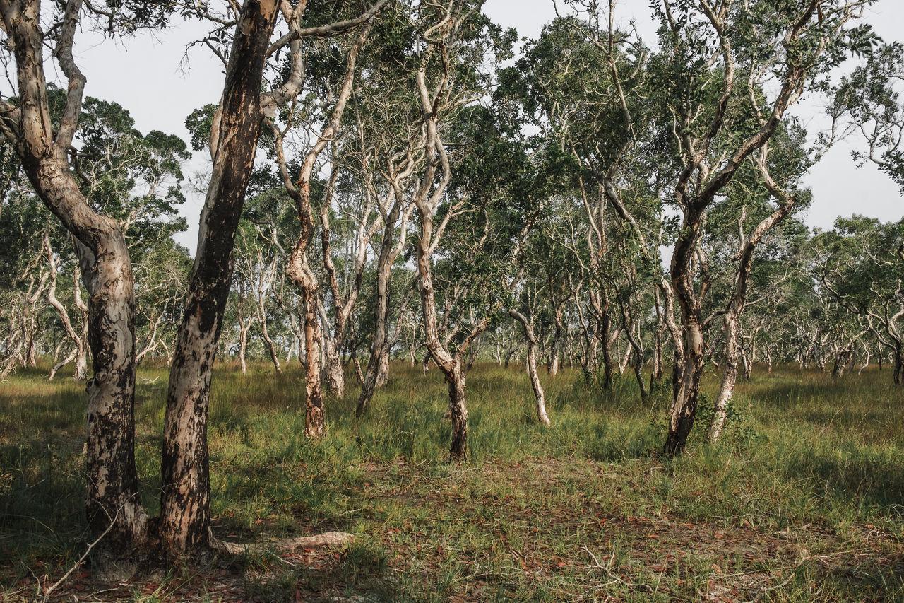 TREES GROWING ON FIELD