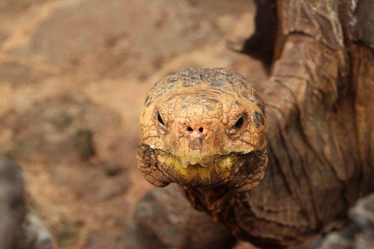 Close-Up Of Tortoise Head