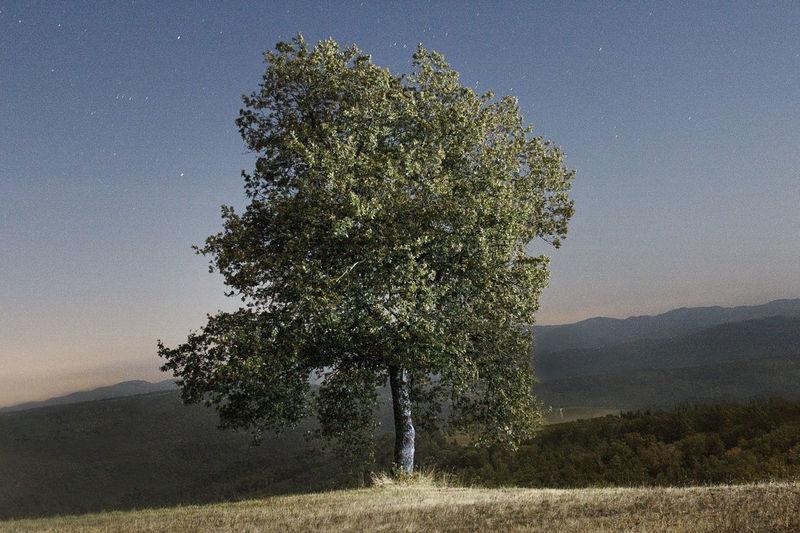 Single tree on landscape against the sky