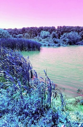 Mystical Marsh Marsh Mystical Mystical Marsh