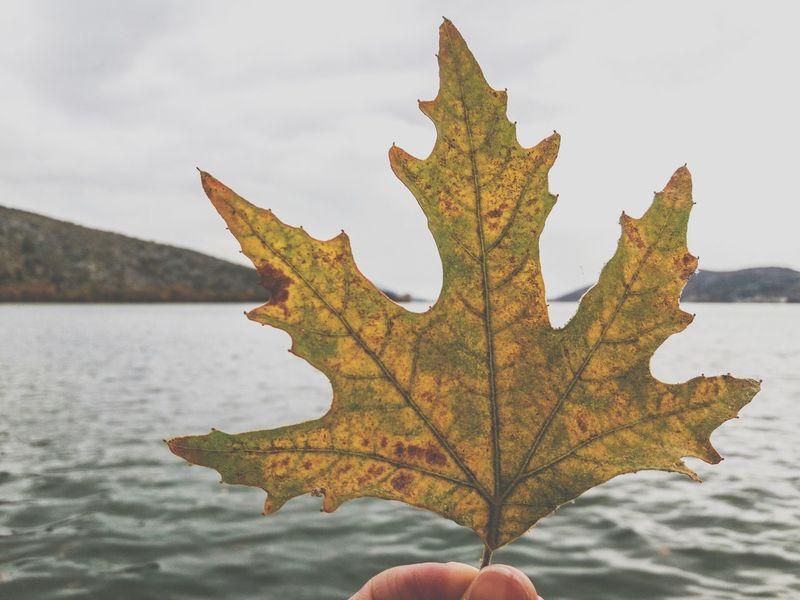🍁🍂autumn Kastoria Lake Beautiful View Photography Enjoying Life October Nature Naturelovers Nature Photography Lake View Beautifulview Myview Autumn Colors Autumn🍁🍁🍁 Beautiful Nature