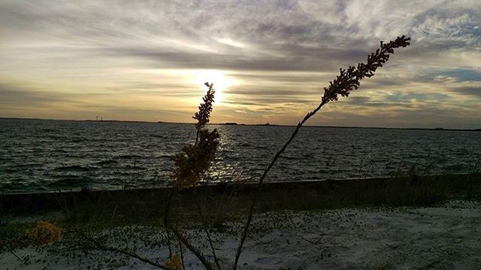 One more from this Morning Sunrise Navarrebeach LoveFl Emeraldcoast Emeraldcoasting HTCOneM9 Htconelife Oneography 20 .7mp @htc @HTCUSA @HTC_UK @HTCelevate @HTCMEA @HTC_IN @HTCIreland @HTCCanada @HTCMalaysia @htcsouthasia @htcfrance TeamHTC IBleedGreen @sharealittlesunshine @pureflorida Beachlife