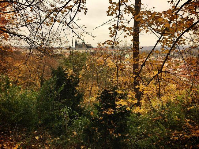 Prague Castle from Petřín Hill Traveling Tc-ce2014 Autumn Colors