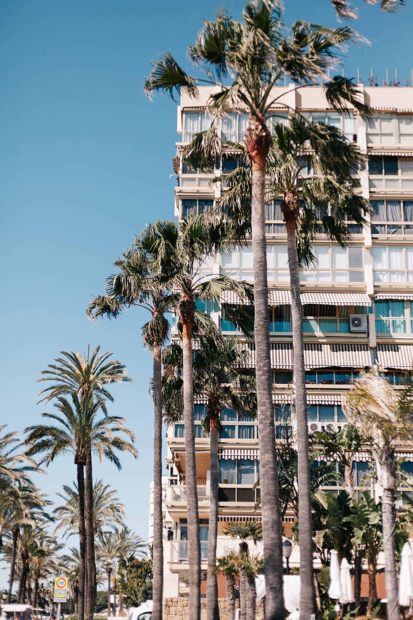 LOW ANGLE VIEW OF PALM TREES AGAINST BUILDINGS