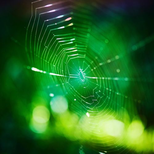 Spider Web Close-up Focus On Foreground Natural Pattern Fragility Animal Themes Spider Nature Pattern Green Color Web Zoology Selective Focus Arachnid Trapped Beauty In Nature Intricacy Complexity Full Frame Spiderweb