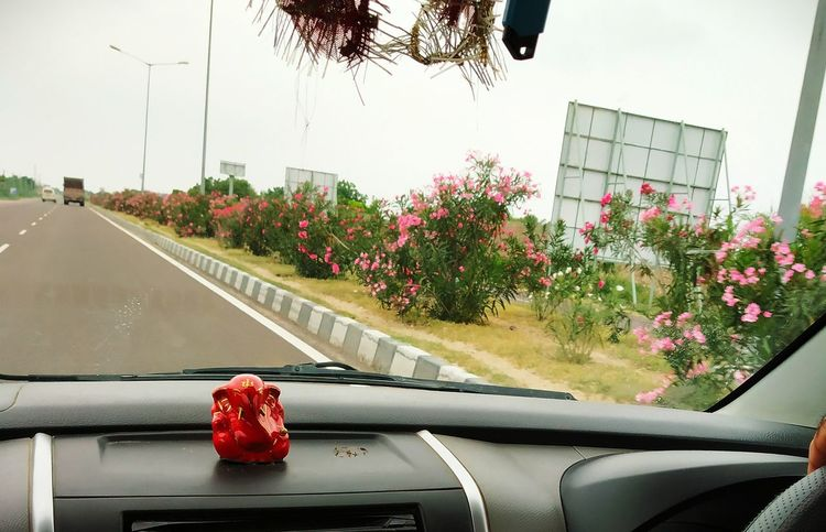 Planting of flowery herbs on the dividers of four-lane national highway. Pink Colour Flower Beauty In Nature To Avoid Monotony Of Long Driving Nerium Oleander Var. Indicum EyeEmNewHere Flower Land Vehicle Car Sky Plant Car Interior Vehicle Interior Windscreen