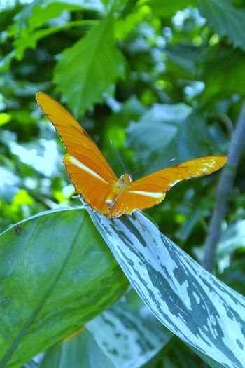 EyeEmNewHere Butterfly Butterfly - Insect Beauty In Nature Impending Summer Summer Fun No People Leaves And Veins The Great Outdoors - 2017 EyeEm Awards Butterflies And Flowers Transformation Orange Butterfly Orange And Green