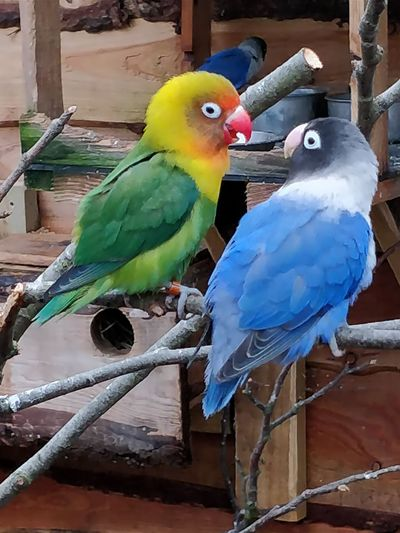 Northumberland North East England Bird Parrot Cage Perching Nature Multi Colored Outdoors Beauty In Nature No People Day Animal Themes Close-up