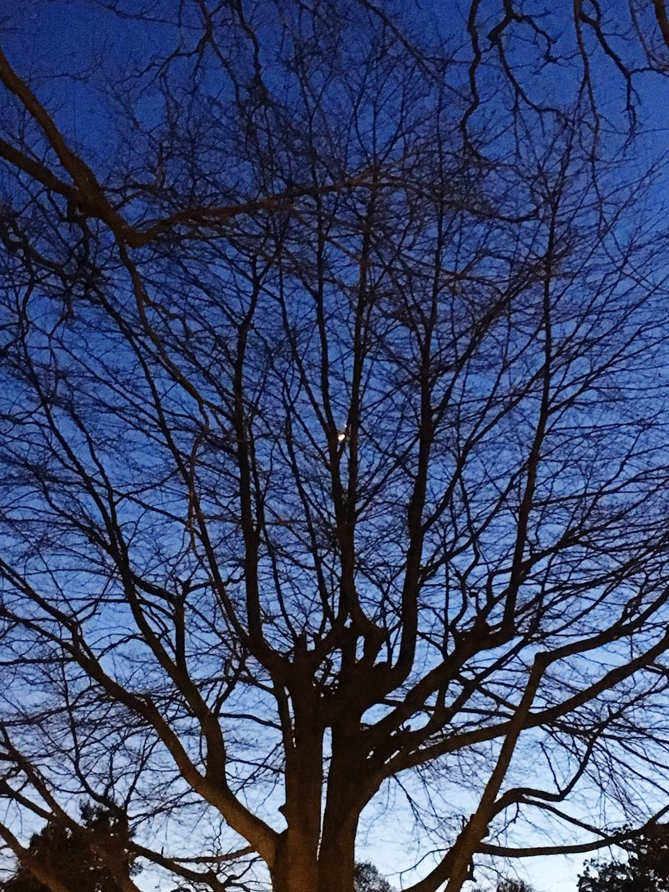 bare tree, tree, branch, nature, low angle view, sky, tranquility, outdoors, tree trunk, beauty in nature, no people, scenics, day, clear sky