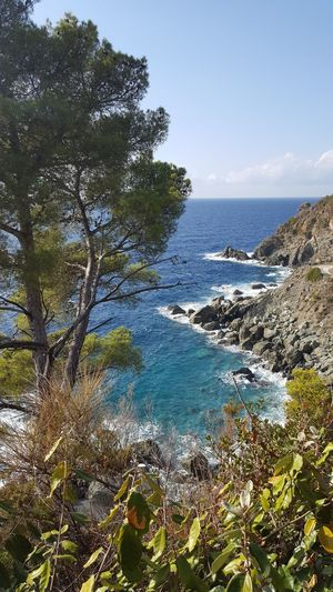 Tree Nature Beauty In Nature Sea Sky Day No People Scenics Outdoors Horizon Over Water Clear Sky Water Liguria,Italy
