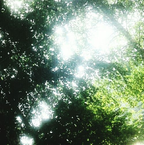 Forest Beauty In Nature Sunlight Nature Green Color Forest Green Nature No People freshness Sunlight Through The Trees Sunlight On Leavessunlight Fresh Green light In The Forest