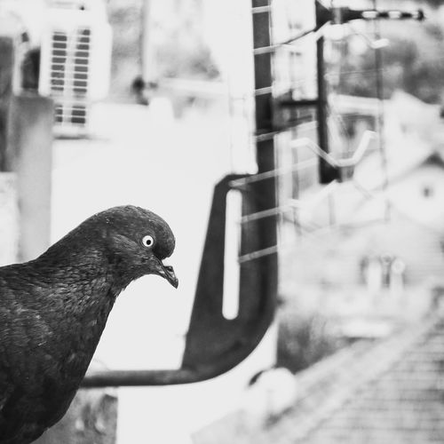 Close-up of bird perching on a window