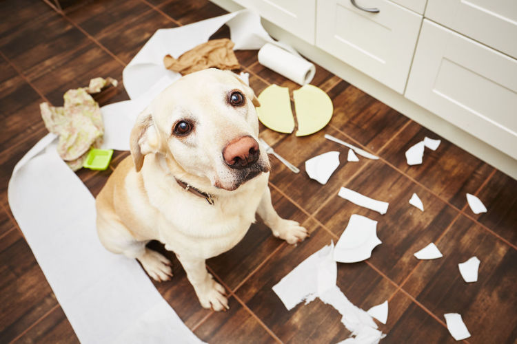 High Angle Portrait Of Dog Sitting With Trash In Kitchen