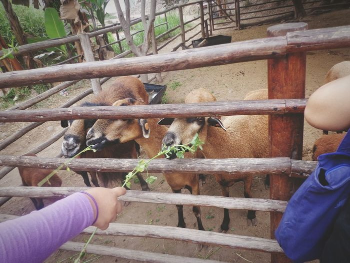 Cositas bonitas. <3 Lovelies Animals Nature IloveIT ♡