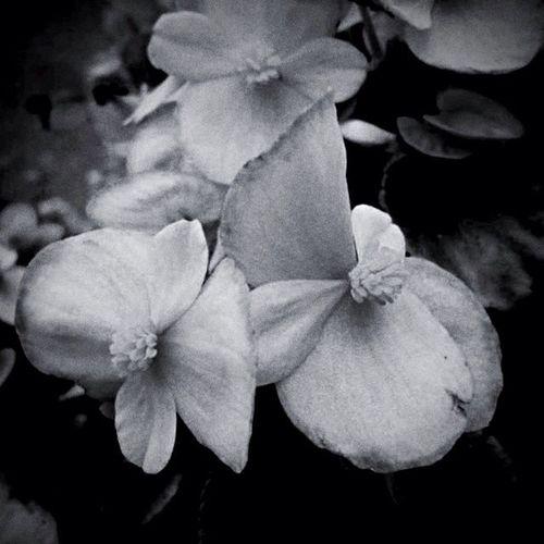 Flowers Bw