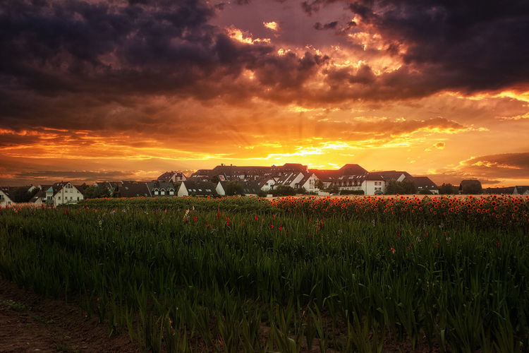 Sonnenuntergang über dem Großberg Mainz Germany