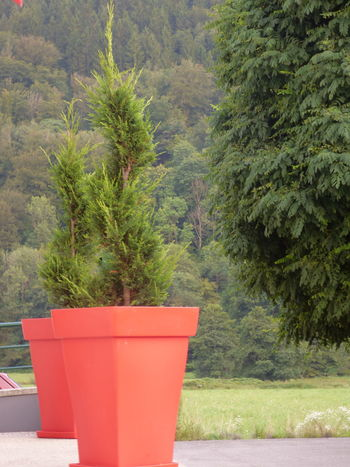 Carte Postale Fond D' écran Forest Mountain Nature Outdoors Plant Pot Red Tree