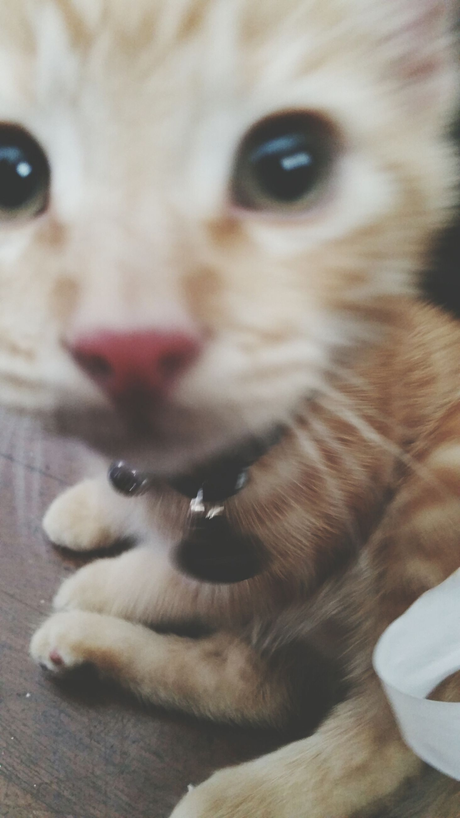 pets, domestic animals, animal themes, one animal, mammal, indoors, dog, close-up, portrait, animal head, looking at camera, domestic cat, relaxation, animal body part, focus on foreground, no people, home interior, cat, whisker