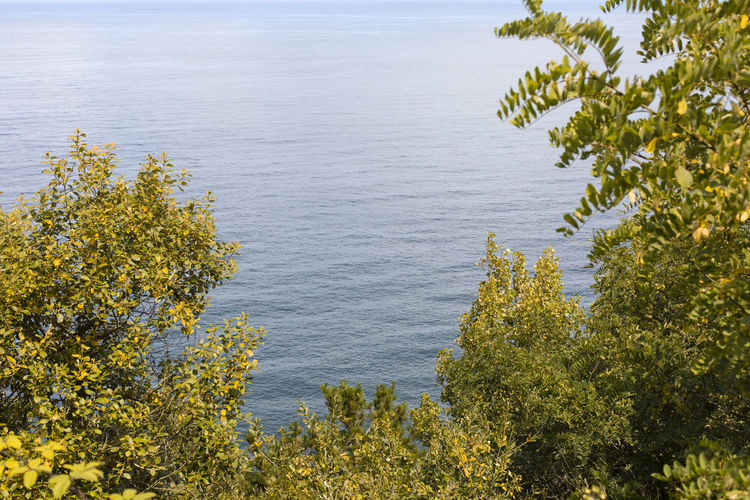 Scenic view of sea and trees against sky
