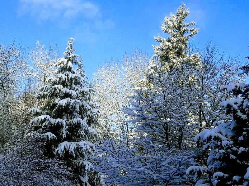 Snow Different Type Of Trees Fluffy Clouds Blue Sky Branches Bending From Weight Of Snow No People Textured Landscape Cold Outside Beautiful Scene White Snow Covered Trees The Great Outdoors - 2018 EyeEm Awards