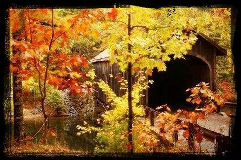 Autumn Colors Covered Bridge old Bridge First Eyeem Photo