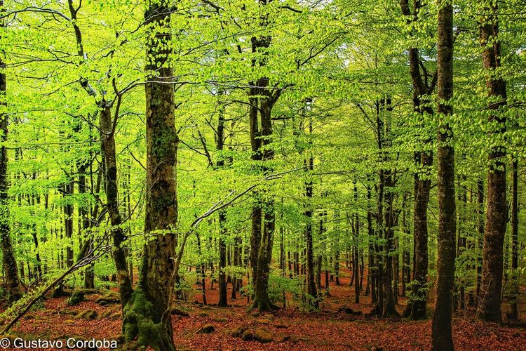 Trees growing in forest